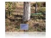 Gagarin s tree